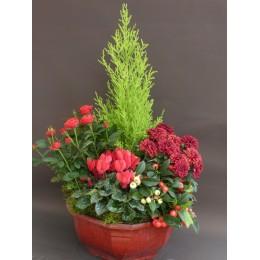 Composition de plantes